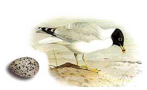 семейство чайковые