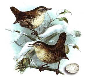 птица отряда воробьиных