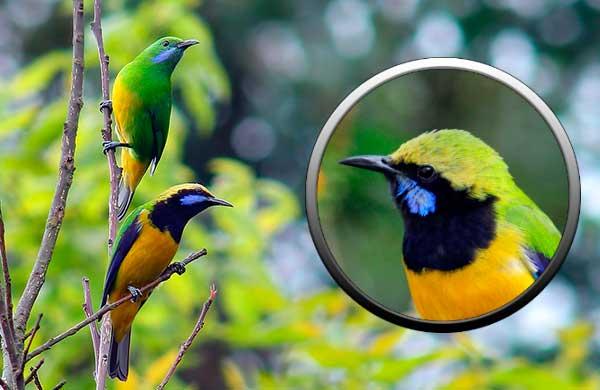 мир птиц, воробьиные
